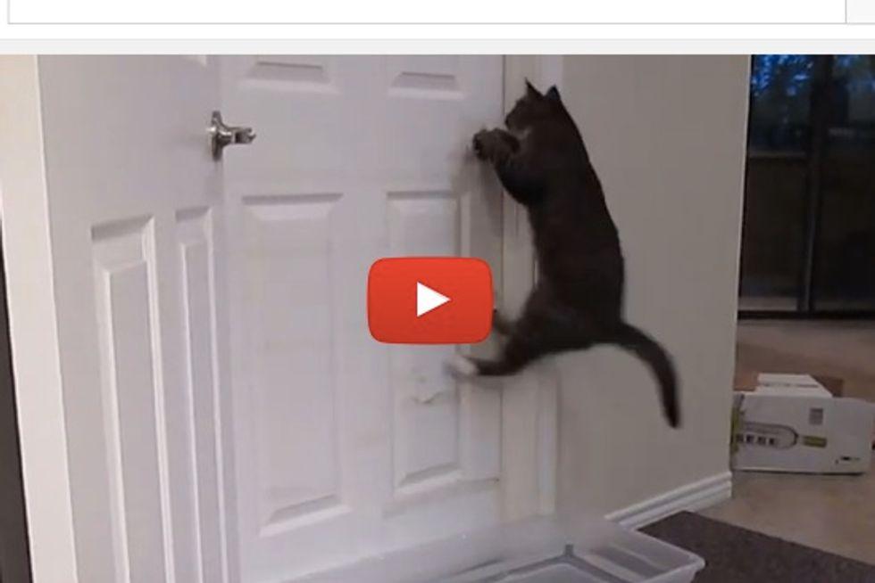 Cat Opening Doors