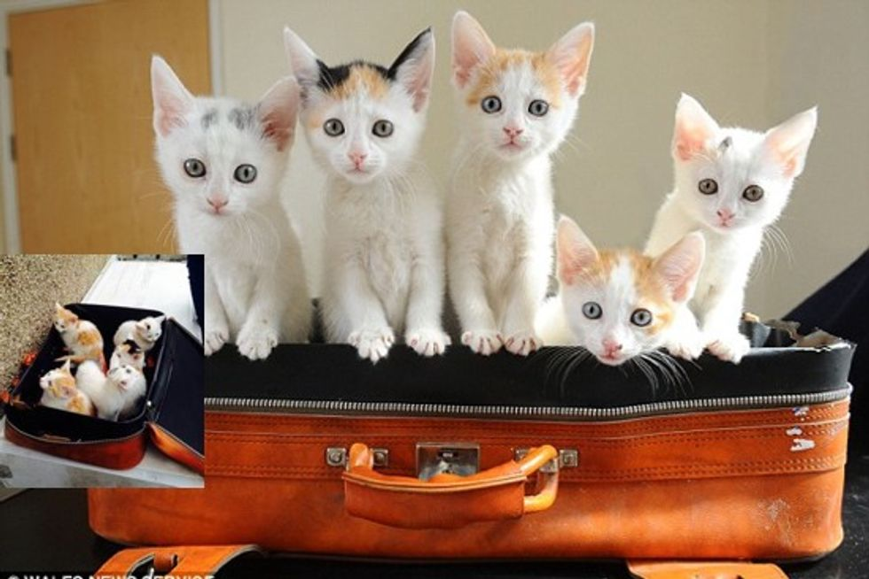 Five Kittens Found In Suitcase Now In Good Hands