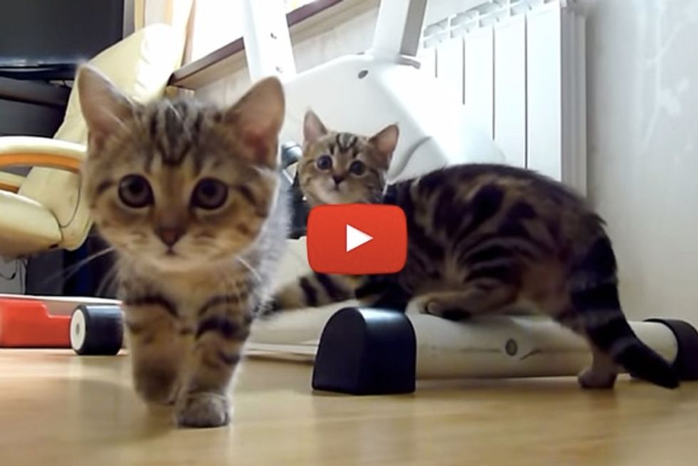 Funny Cats Spy Thriller