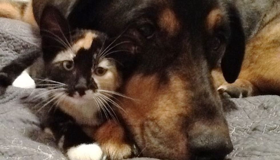 Cat who Grew Up with Her Dog Finds Comfort After Losing Her Best Friend