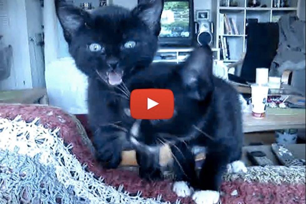 Meowy Foster Kittens