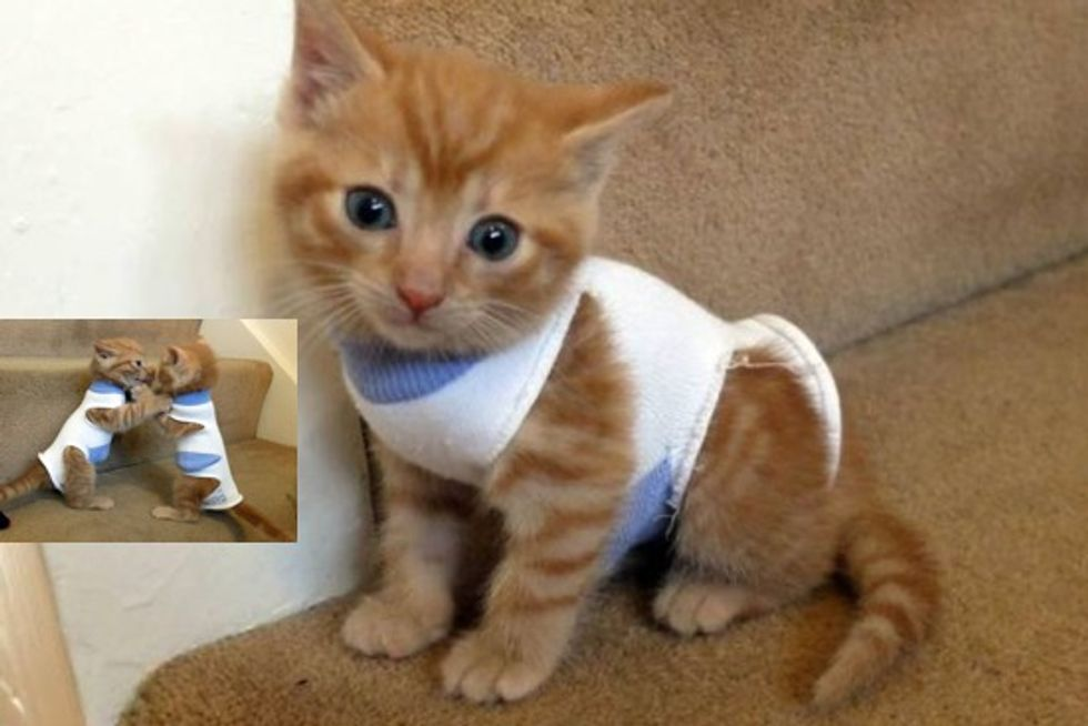 Abandoned Kittens Found In A Shed, Nursed Back To Health, Wearing Baby Socks As Protective Coats
