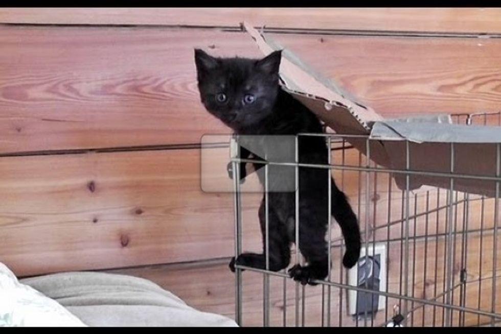 The Cute Kitten Escape