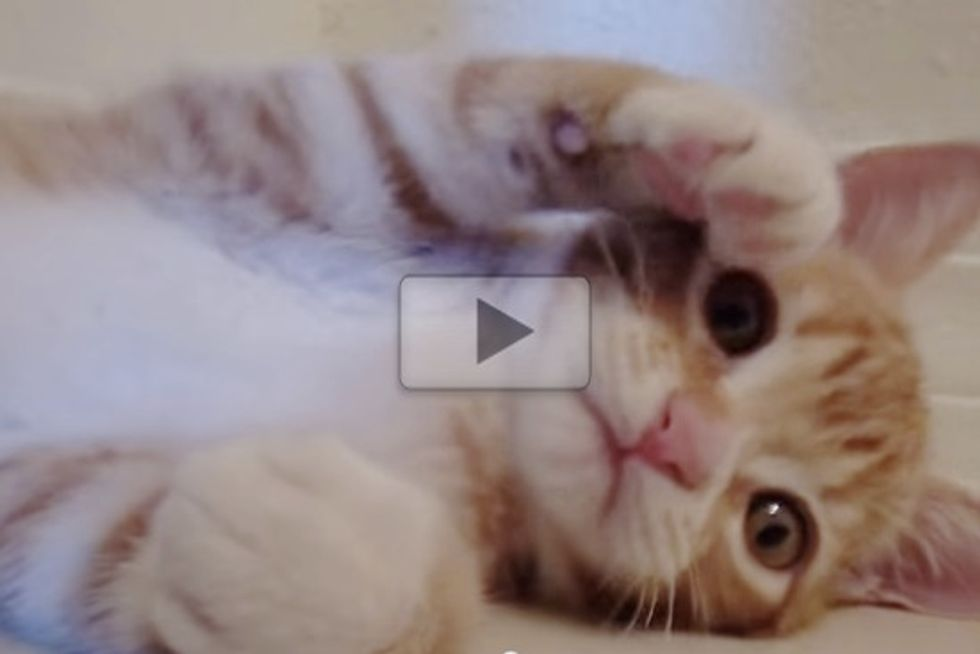 Tiny Kitty BIG PURR!