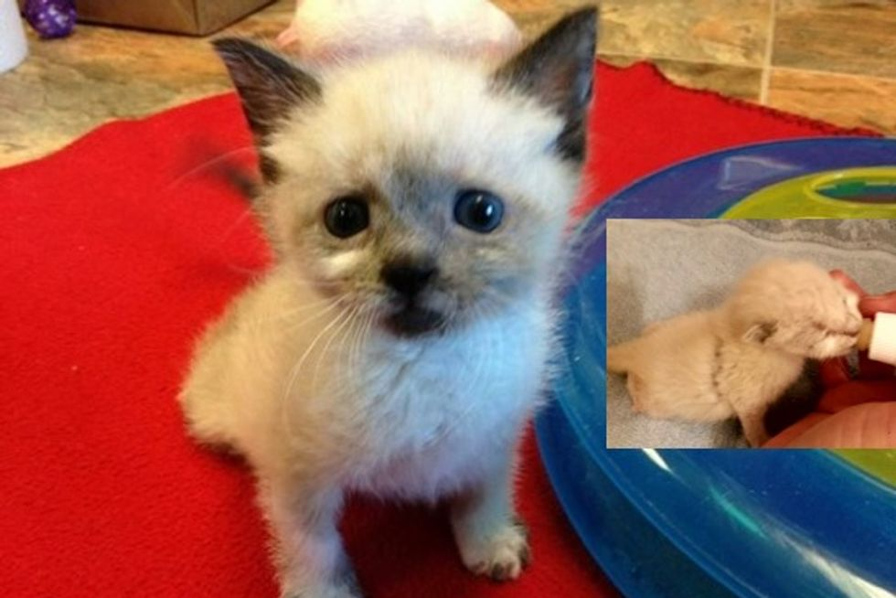Tanzy the Brave Paraplegic Cat, Then and Now