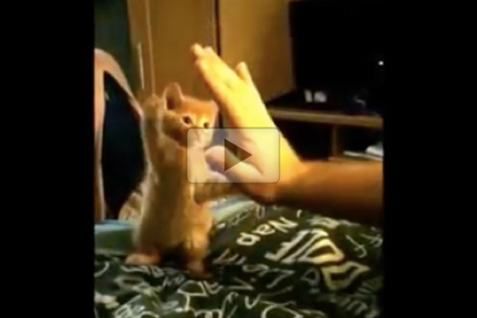 High Five Kitten