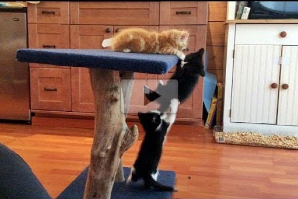A Cute Kitten Cliffhanger