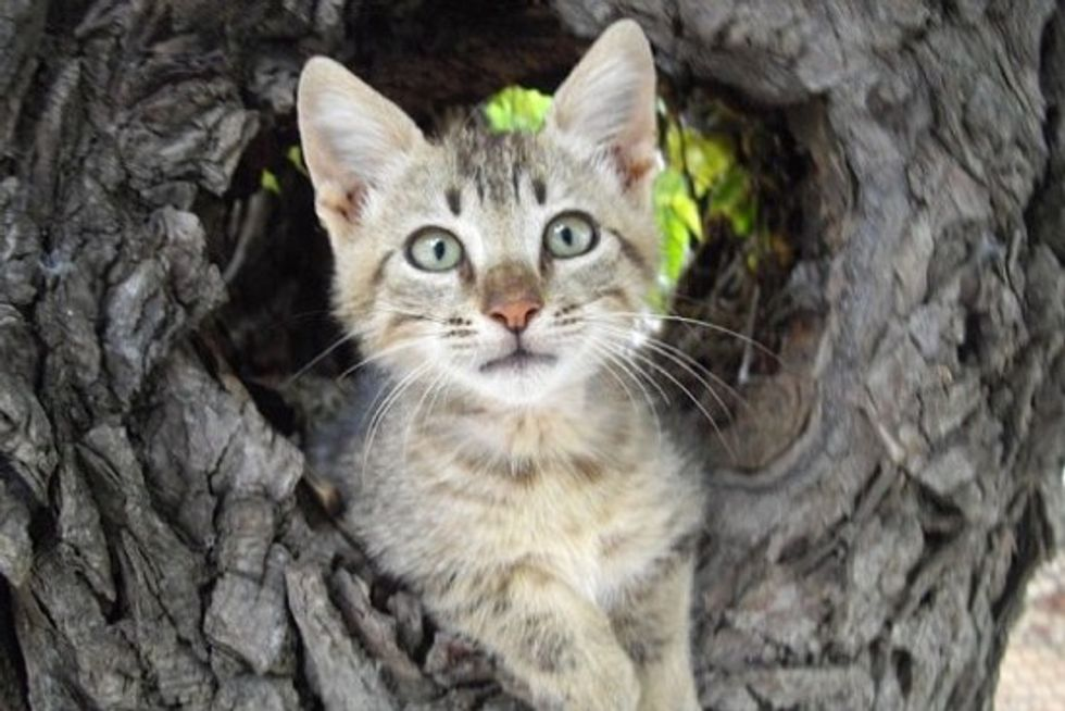 Woman Goes On A 2 Month Mission To Get Rescue Kitten From Greek Island To Britain