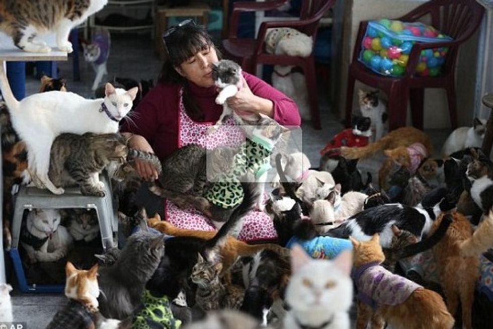 Nurse Turns House Into Sanctuary For Old, Sick Cats In Peru