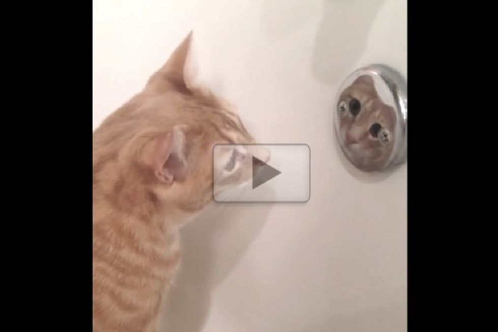 Rigby The Cat Sees Another 'Kitty'