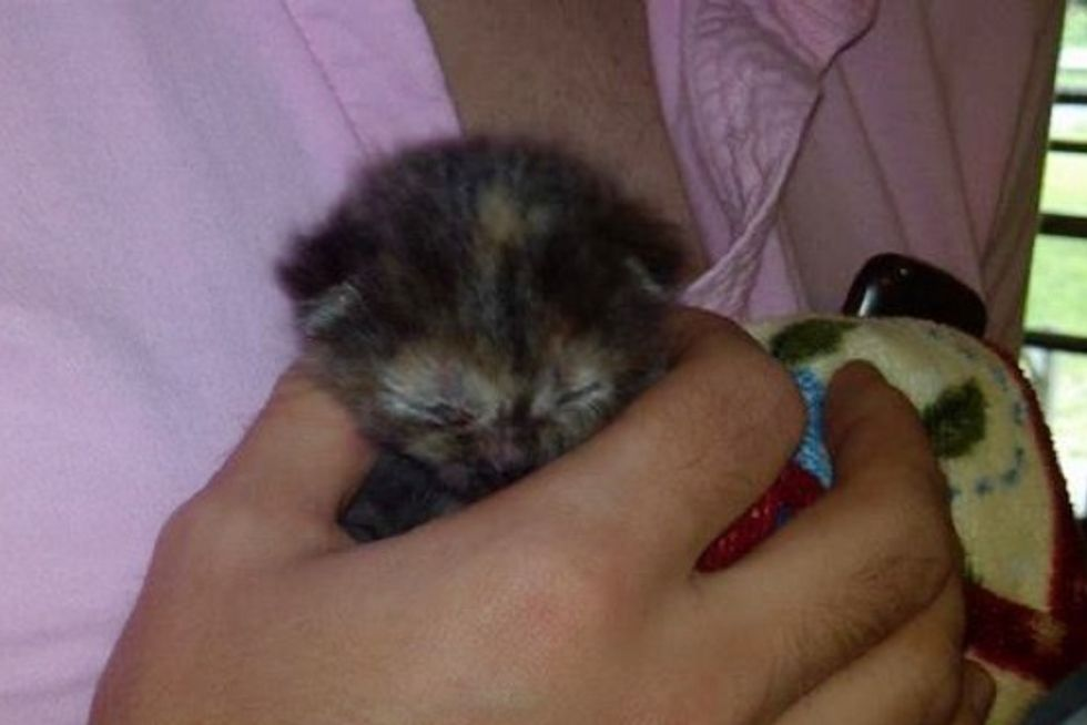 Day-old Orphan Kitten Found At Historical Landmark