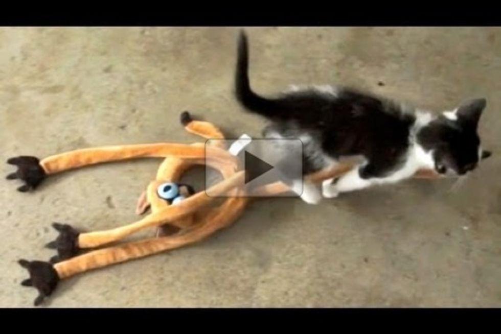 Sneaky Kitten Thief!