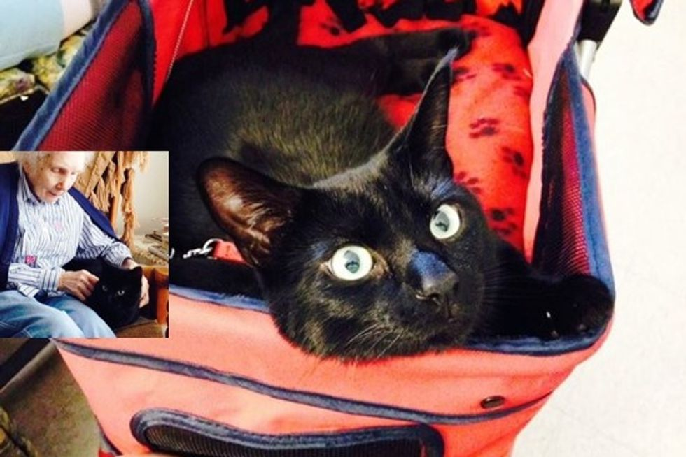 Draven The Inspiring Therapy Cat Changing Lives