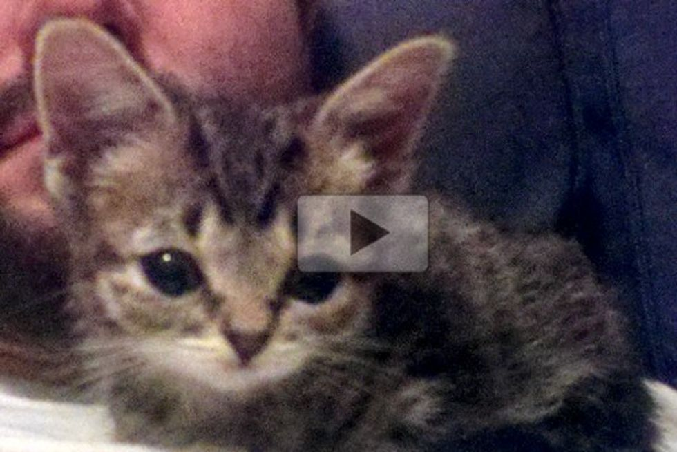 Kitten BUB's First Week Home