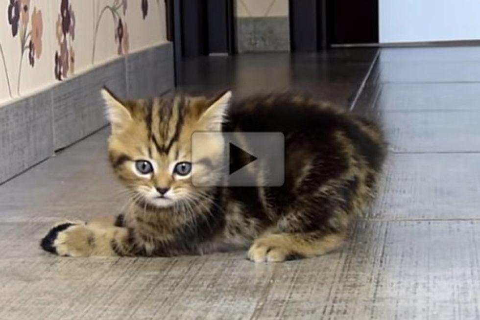 Little Cat Hunter
