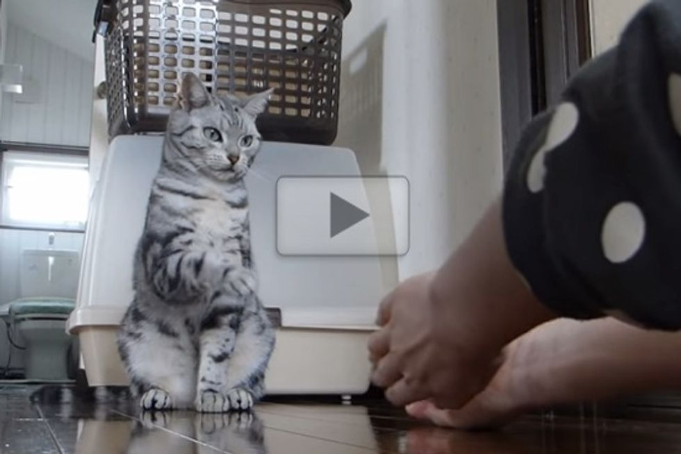 Cat Exercises With Human