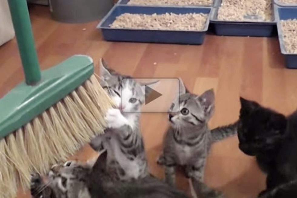 Cleaning With Cute Kittens