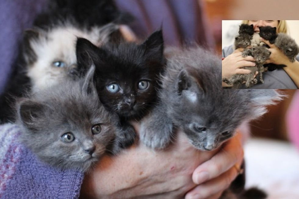 Litter of Six Rescue Kittens