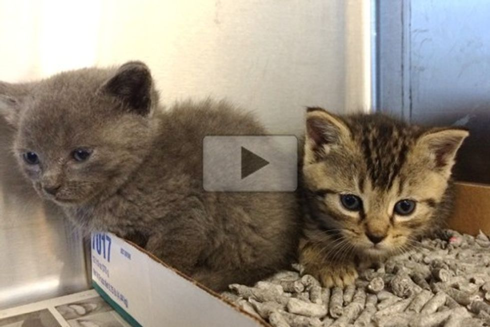 Worker Rescues 'Bucket Brigade' Kittens At Work Site