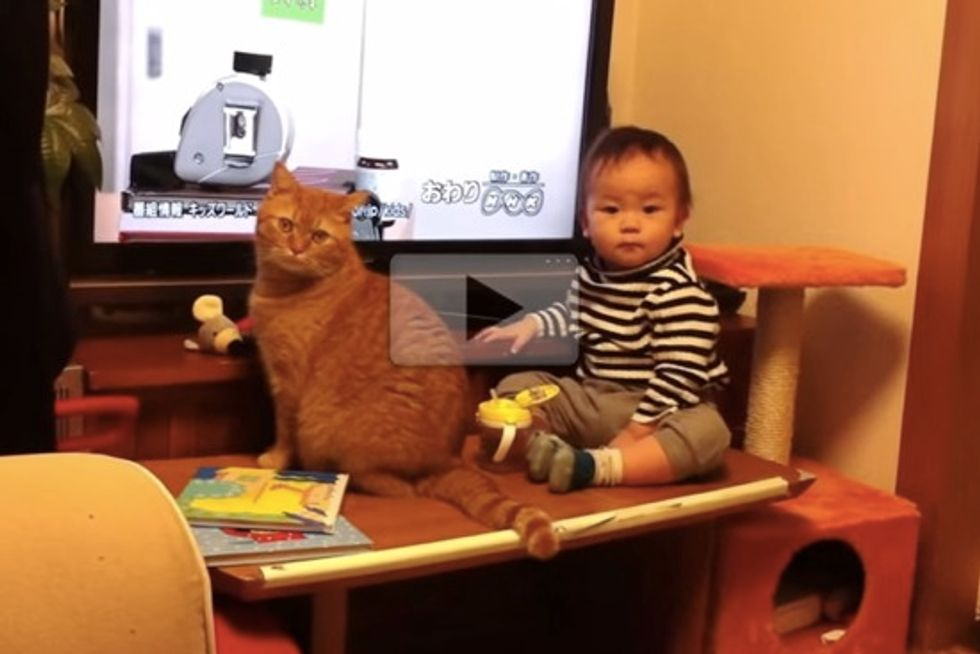 Cat And Baby TV Buddies