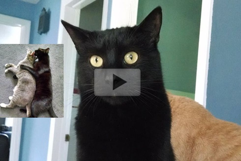 Xander Former Lab Research Cat Finds Freedom And Loving Home