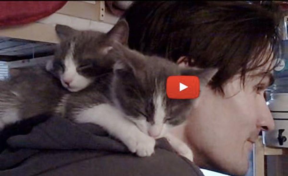 Kittens Climb On Dad's Shoulder