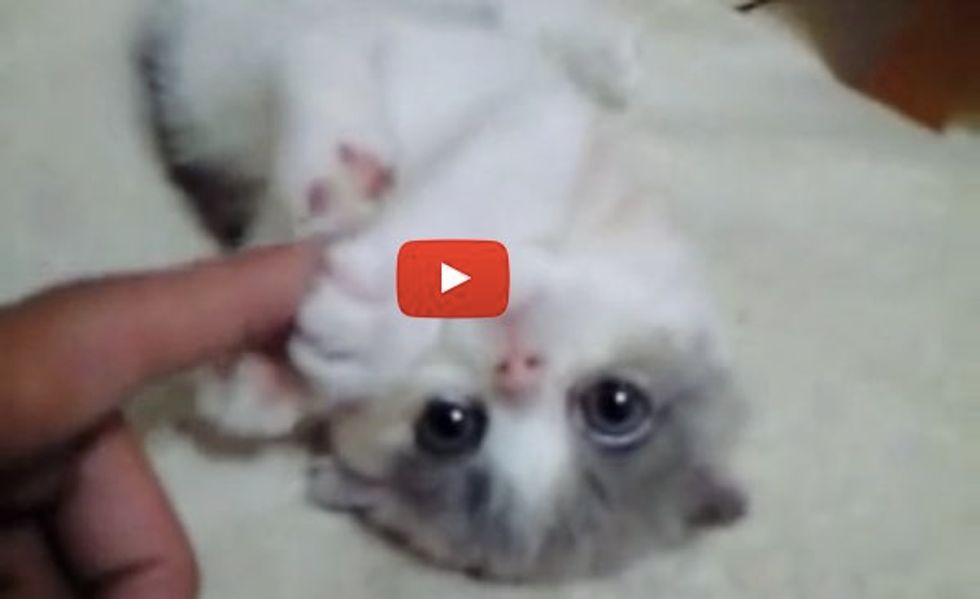 Kitten Holding Hands