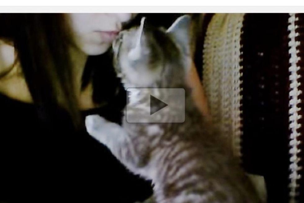 Cute Kitten Kisses Before Nap