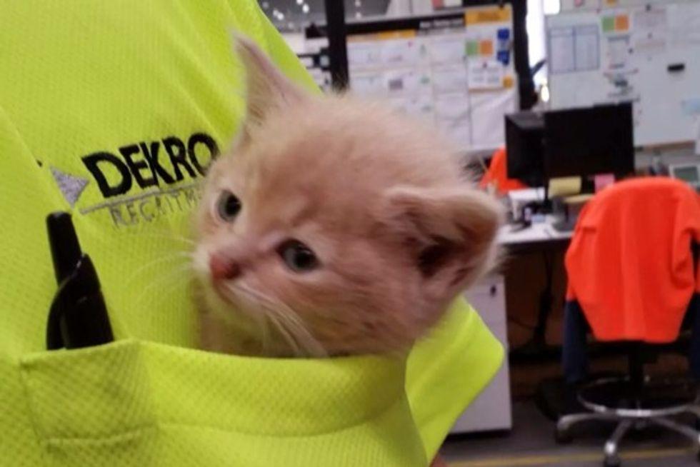 Pocket Kitten Found At Job Site