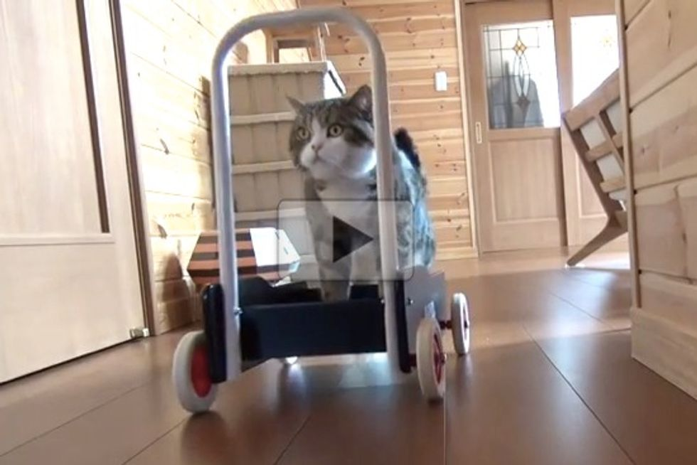 Maru Pushing Cart