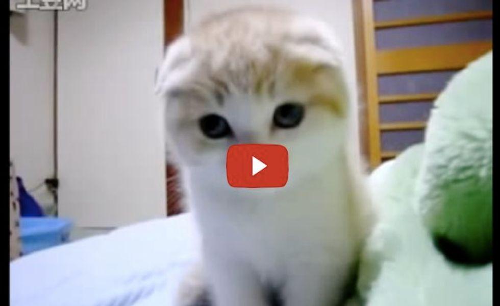 Little Purring Kitten