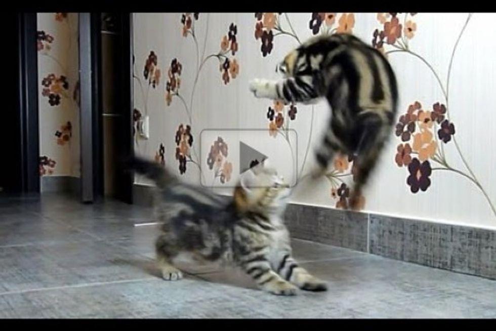 Kitten Fight Dancing