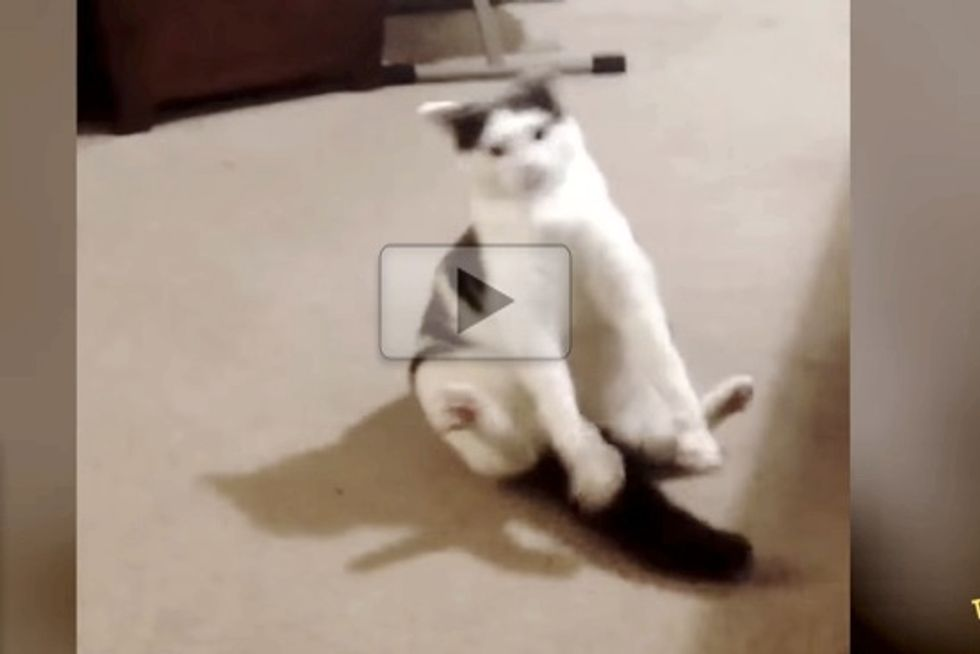 How Bob The Cat Gets His Exercise