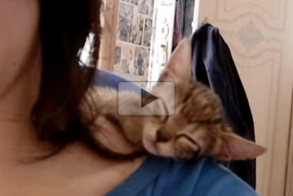 Adorable kitten Falling Asleep On Shoulders
