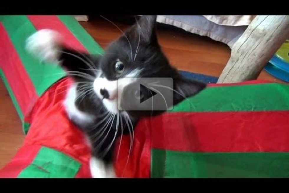 Cute Kittens Playing In A Cat Tunnel