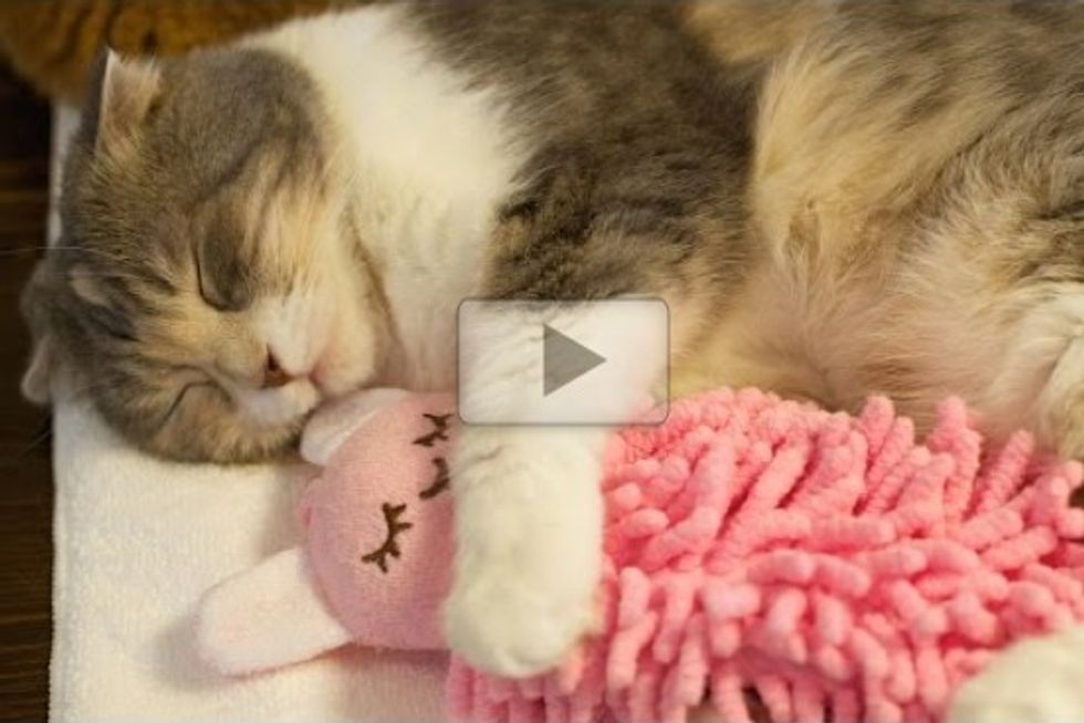 Sleepy Cat Cuddles Her Doll