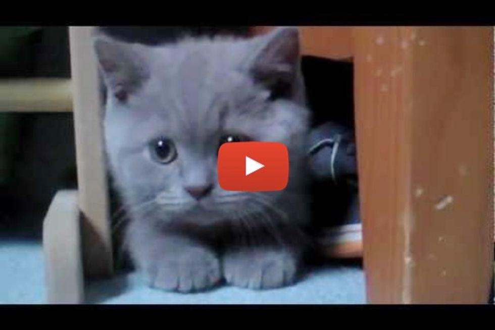 Fluffy Purring Kitten