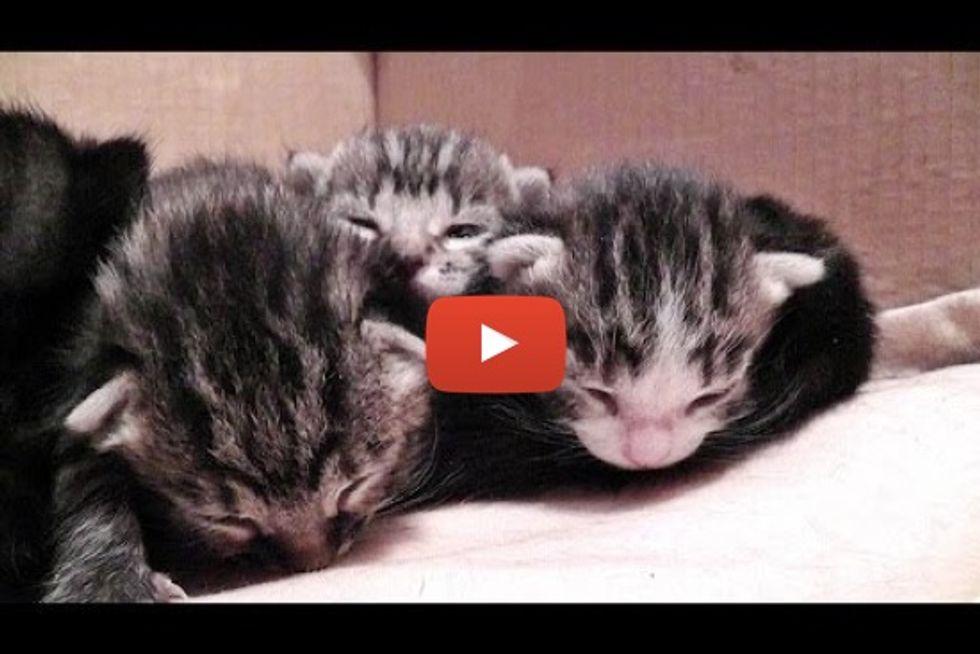 Sleepy Little Kittens