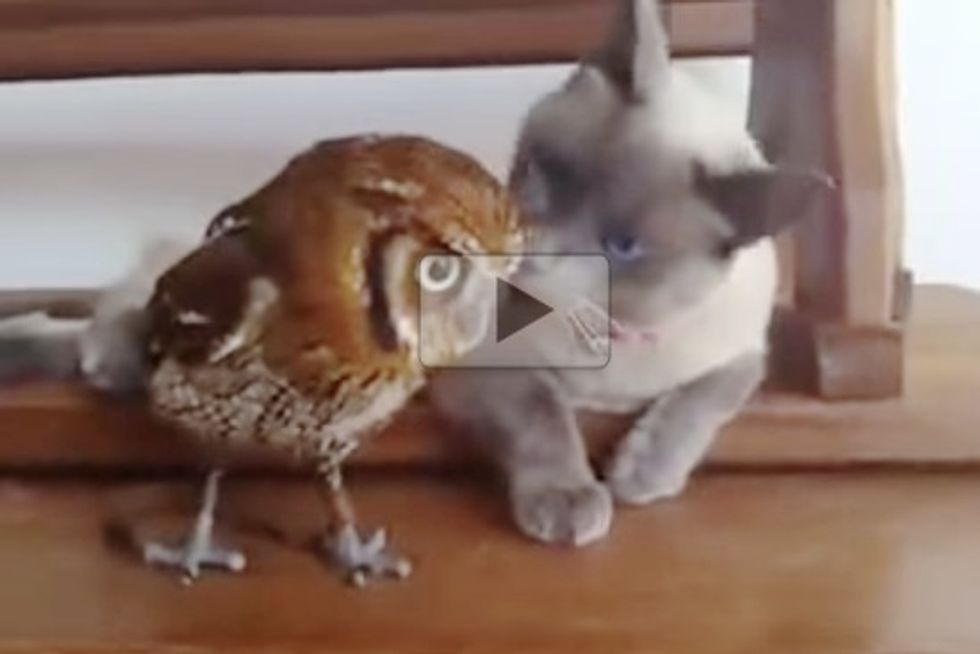 This Cat And Owl Are Best Friends