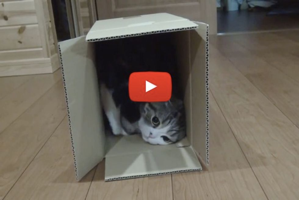 Maru And Many Boxes