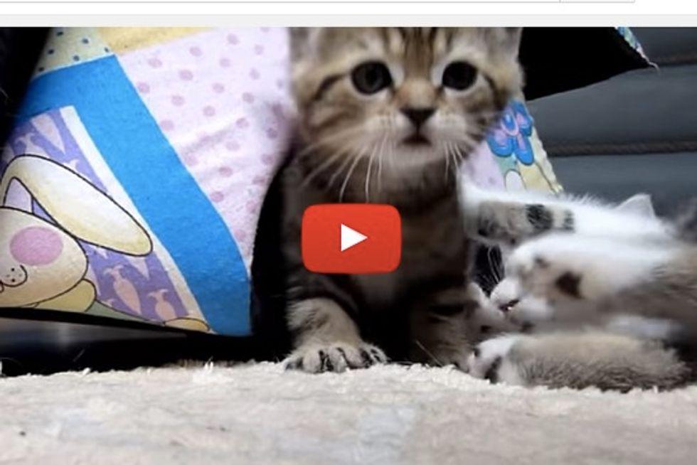 Gang of Kittens