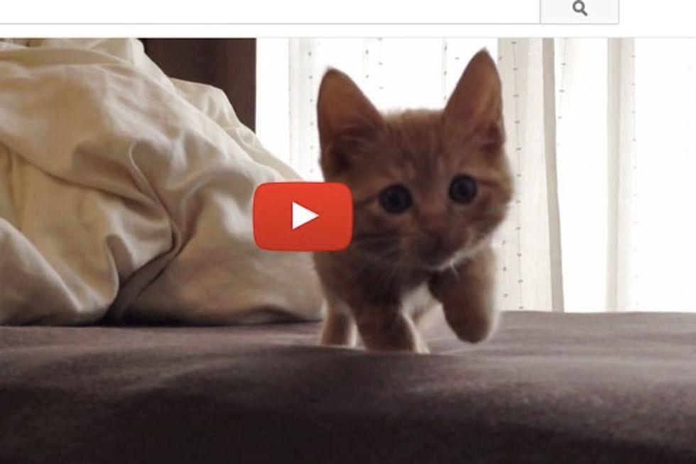 Little Stalking Kitten
