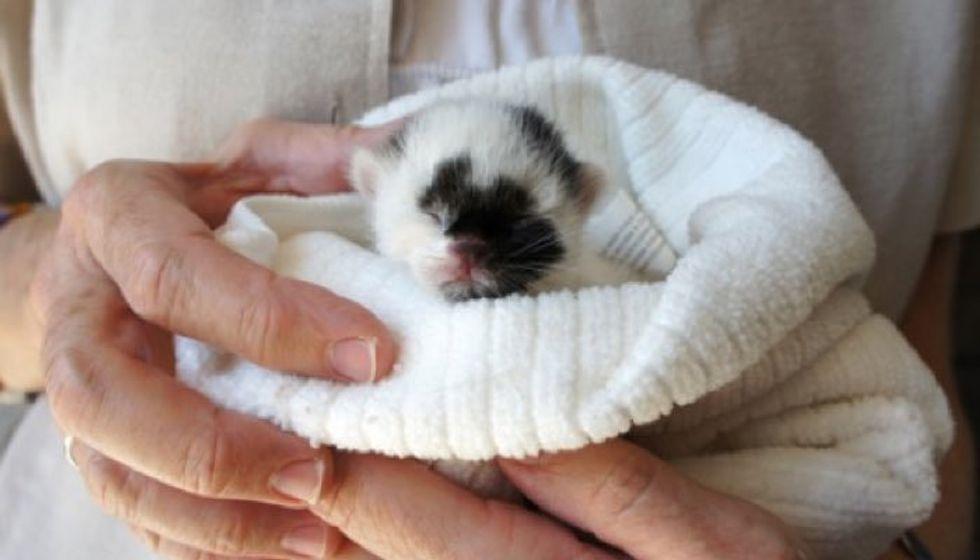 Kitten Looks Like Panda Bear Found on Sidewalk