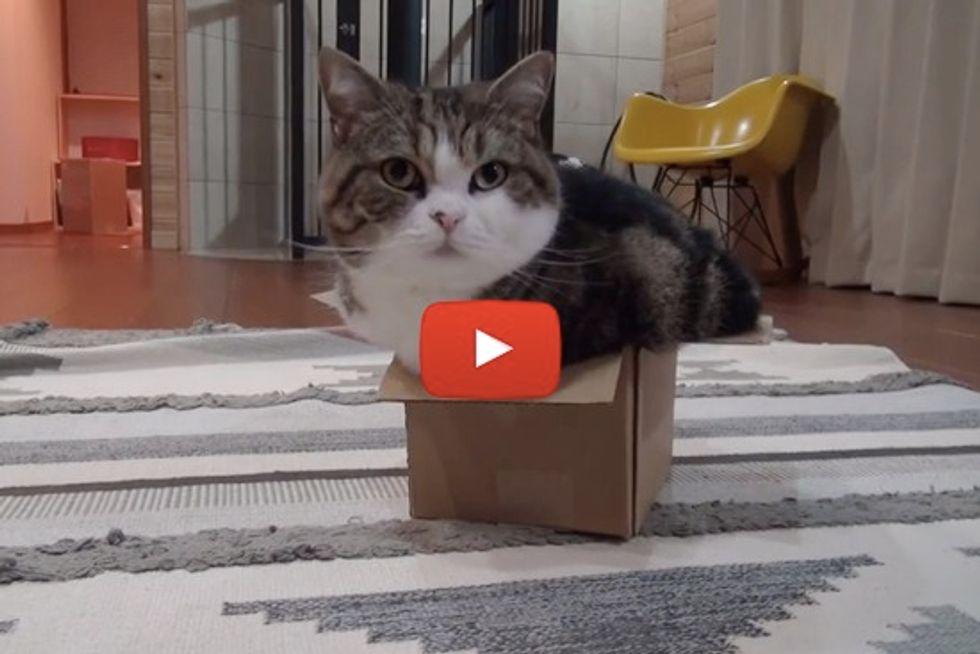 Maru Stuffs Himself Into A Box
