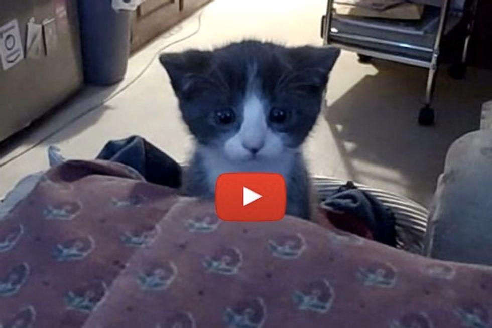 Kitten In Cute Ninja 'Attack' Mode