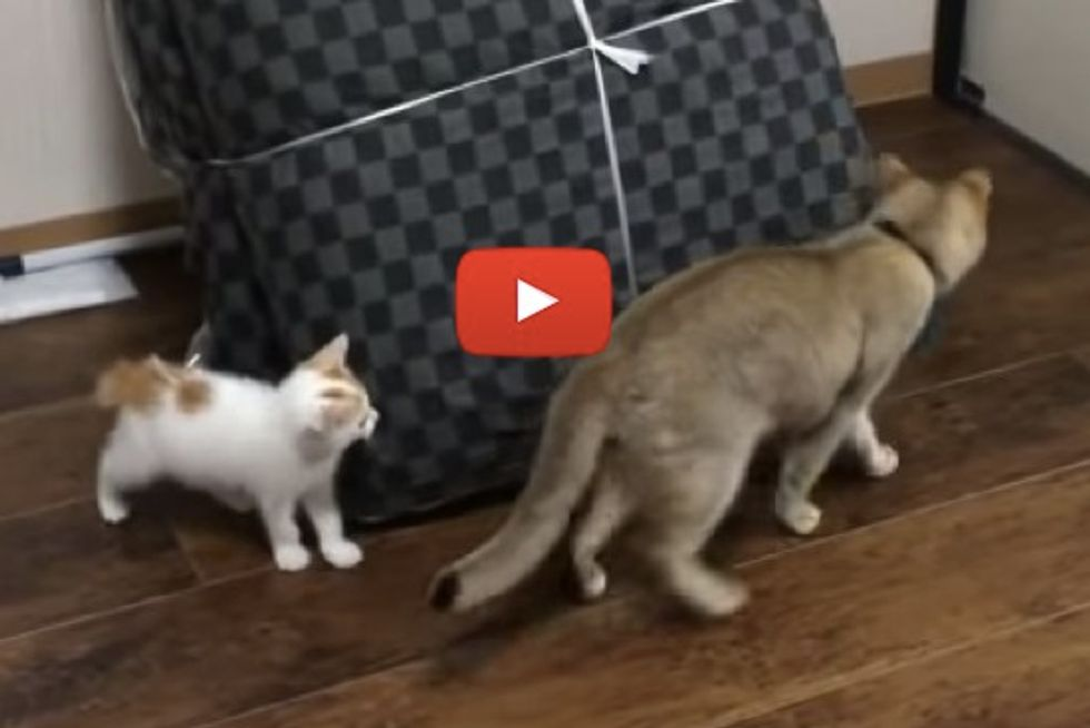 Cats Playing Tag