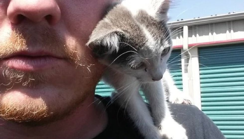 Man Saves Orphaned Kitten From Construction Site