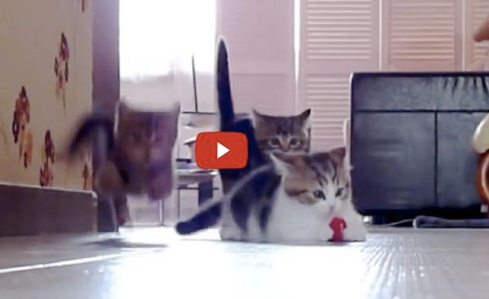 Kittens Racing, Jumping, Flying across the Room. It's Madness!