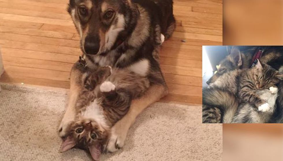 What They Get When They Let Their Dog 'Raise' the Kitty...