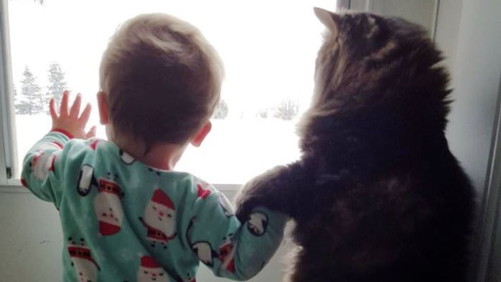 Maine Coon Cat Guards His Baby Sister for Life!